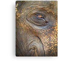 Close-up Elephant eye Canvas Print