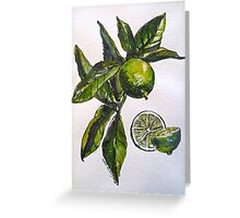 Limes. Pen and wash. 42x32cm. Greeting Card