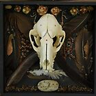 raccoon skull assemblage by AnjiMarth