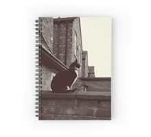 Corrie Cat! Spiral Notebook