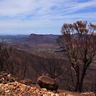 After the Bushfires in The Warrumbungle Nation Park by myraj