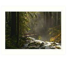 Bridge Through The Forest Art Print