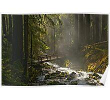 Bridge Through The Forest Poster