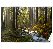 Winding Through The Sol Duc Rainforest Poster