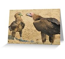 Lappet Faced Vulture and Bateleur Eagle Fight Greeting Card