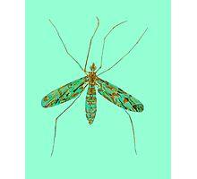 Primitive Crane Fly 3 Photographic Print
