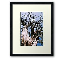 Dune Tree Framed Print