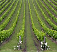 White Christmas, Or Red? (Depends On The Colour Of Your Wine!) by David McMahon
