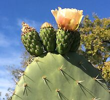 Blooming Cactus by Jane Jenkins