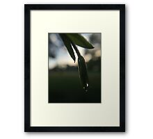 Plant with a Raindrop Framed Print