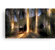 Shadows in The Forest Canvas Print