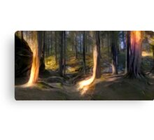The Forest Light Canvas Print