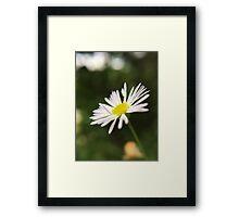 Tiny White Flower Framed Print
