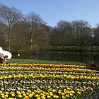 Working at Keukenhof by Morag Anderson