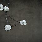 Spring Sonnet I by Martie Venter