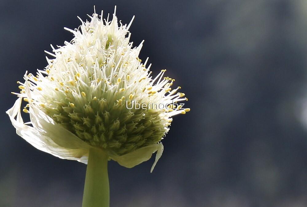 Onion Flower by Ubernoobz