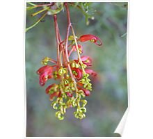 Grevillea in the Park #2 Poster