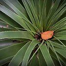 Pandani and Leaf by Jim Lovell