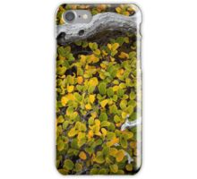 Cradled Fagus, Mt Field iPhone Case/Skin
