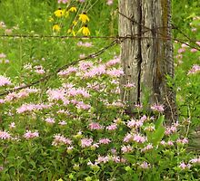 Fence Post & Wildflowers  by lorilee