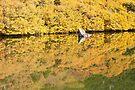 Fagus at Tarn Shelf, Mt Field by Jim Lovell