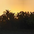 Tropical Panoramic Sunset by Deborah V Townsend