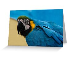 Blue-and-Gold Macaw Parrot Greeting Card