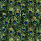 Peacock Feathers by rapplatt