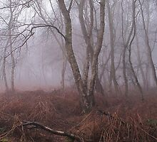 The Forgotten.. by NaturesTouch