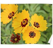 Yellow And Maroon Centers Poster