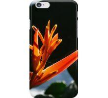 flower and light - flor y luz iPhone Case/Skin