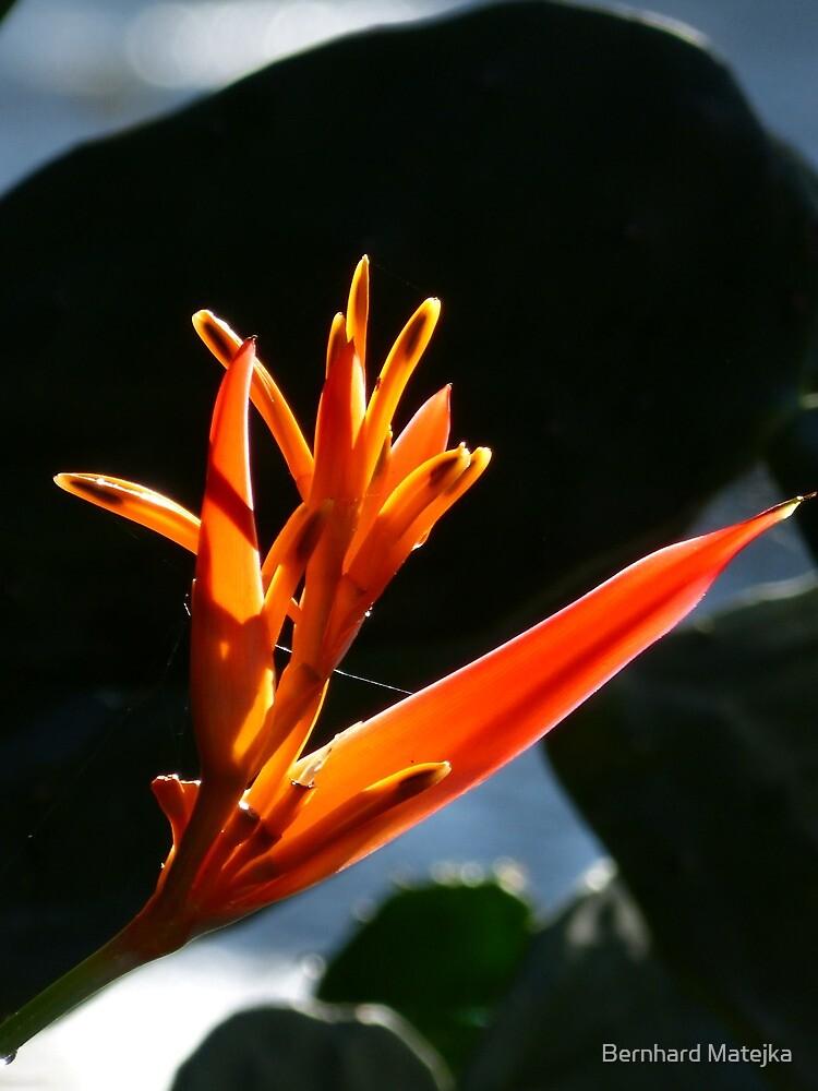 flower and light - flor y luz by Bernhard Matejka