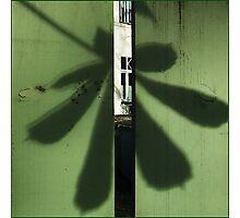 Chestnut leaf Photographic Print