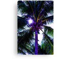 Palm tree with Retro summer filter effect Canvas Print