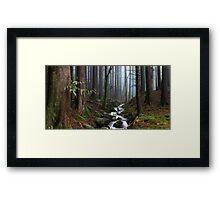 Misty Forest Stream Framed Print