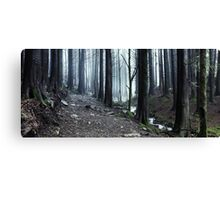 The Forest Road Canvas Print