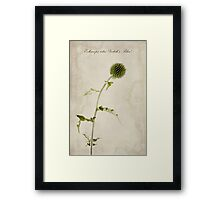 Echinops ritro 'Veitch's Blue' Framed Print