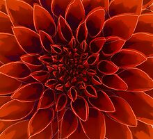 Beautiful Dahlia flower design by o2creativeNY