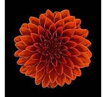 Beautiful Dahlia flower design Photographic Print