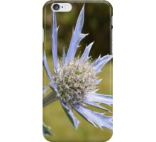 Single Thistle iPhone Case/Skin