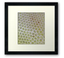Bee crazy Honeycomb Framed Print