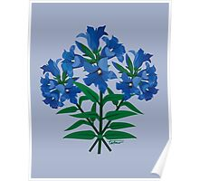 Gentiana Andrewsii Poster