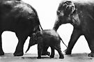 """""""Elephant Walk"""" by Laurie Minor"""