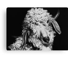 Curly... Canvas Print