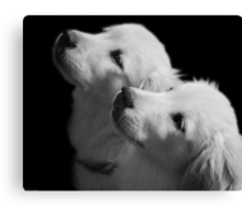 Attentive Canvas Print