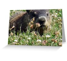 Groundhog, Montreal Greeting Card