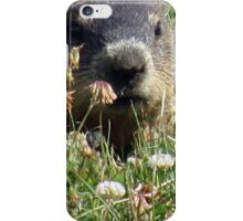 Groundhog, Montreal iPhone Case/Skin