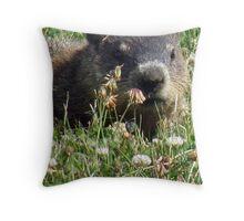 Groundhog, Montreal Throw Pillow