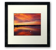 Sunset seagull Framed Print