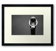 Canada Goose ~ Portrait After Preening Framed Print